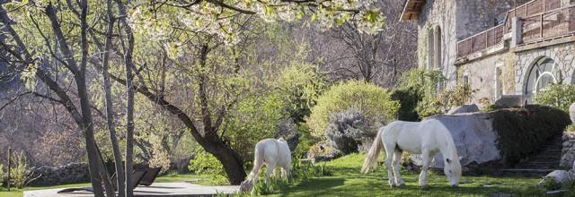 Les chevaux devant le Mas Nouveau